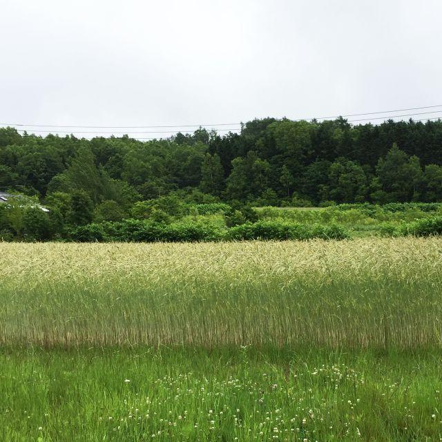 2005_18.jpg